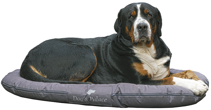 Vankúš a matrac pre psa